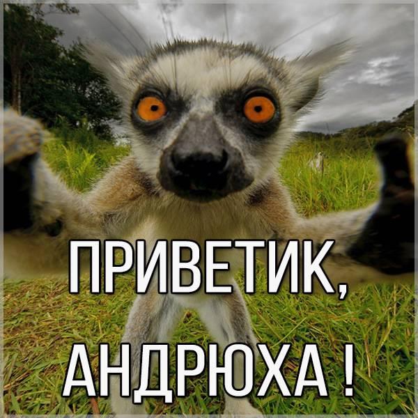Открытка Андрюха приветик - скачать бесплатно на otkrytkivsem.ru