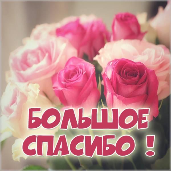 Открытка большое спасибо с цветами - скачать бесплатно на otkrytkivsem.ru