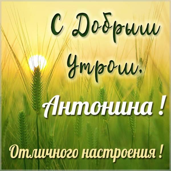 Открытка для Антонины с добрым утром - скачать бесплатно на otkrytkivsem.ru