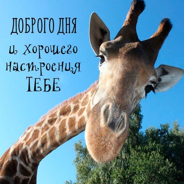 Открытка доброго дня и хорошего настроения смешная - скачать бесплатно на otkrytkivsem.ru