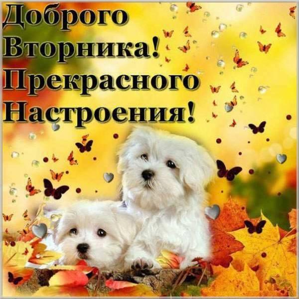 Открытка доброго вторника и хорошего настроения - скачать бесплатно на otkrytkivsem.ru
