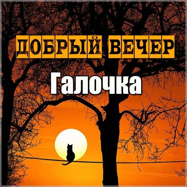 Открытка добрый вечер Галочка - скачать бесплатно на otkrytkivsem.ru
