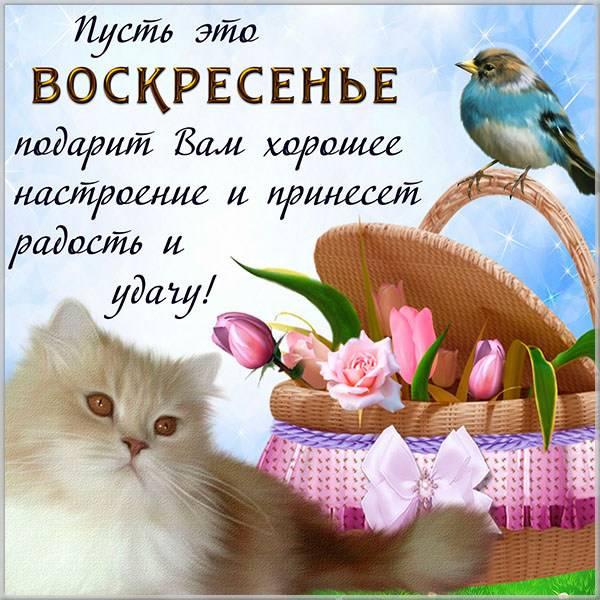 Открытка добрый воскресный день - скачать бесплатно на otkrytkivsem.ru