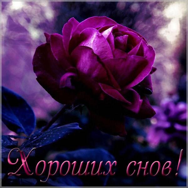 Открытка хороших снов красивая - скачать бесплатно на otkrytkivsem.ru