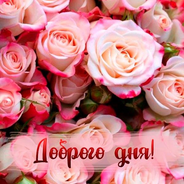 Открытка изображение доброго дня - скачать бесплатно на otkrytkivsem.ru