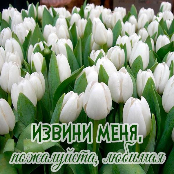 Открытка извини меня пожалуйста любимая - скачать бесплатно на otkrytkivsem.ru
