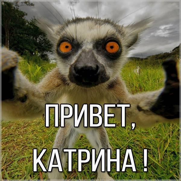 Открытка Катрина привет - скачать бесплатно на otkrytkivsem.ru