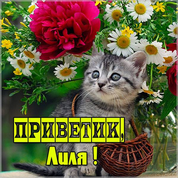 Открытка Лиля приветик - скачать бесплатно на otkrytkivsem.ru