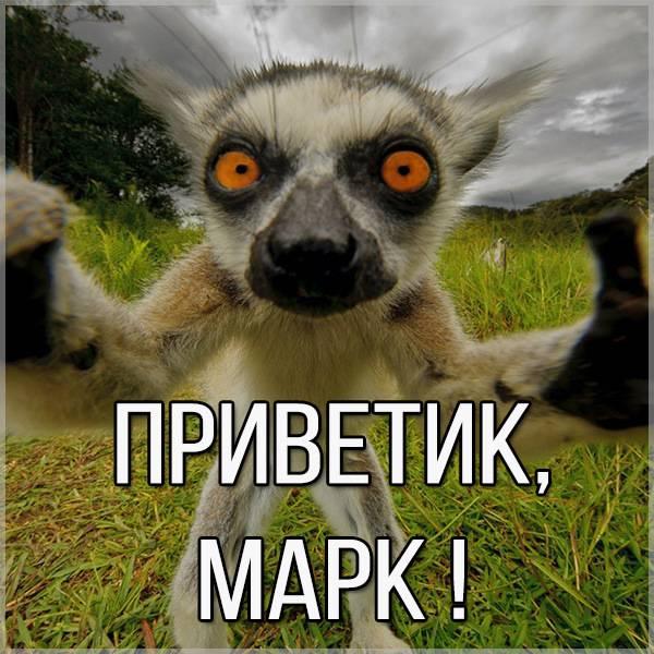 Открытка Марк приветик - скачать бесплатно на otkrytkivsem.ru
