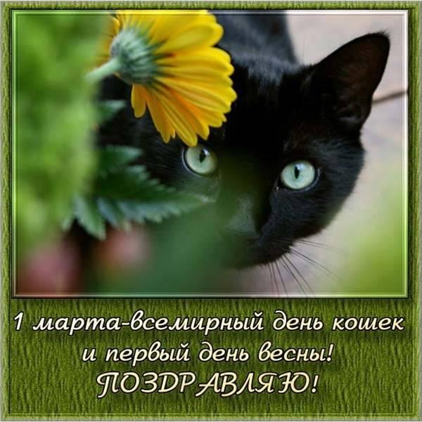 Открытка на день кошек с поздравлением - скачать бесплатно на otkrytkivsem.ru