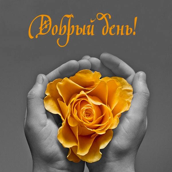 Открытка на тему добрый день - скачать бесплатно на otkrytkivsem.ru