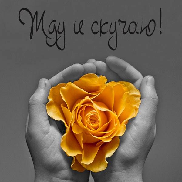 Открытка на тему жду скучаю - скачать бесплатно на otkrytkivsem.ru