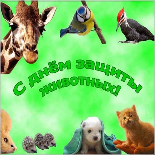 Открытка на всемирный день животных - скачать бесплатно на otkrytkivsem.ru