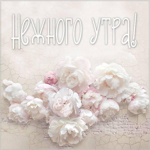 Открытка нежного утра - скачать бесплатно на otkrytkivsem.ru