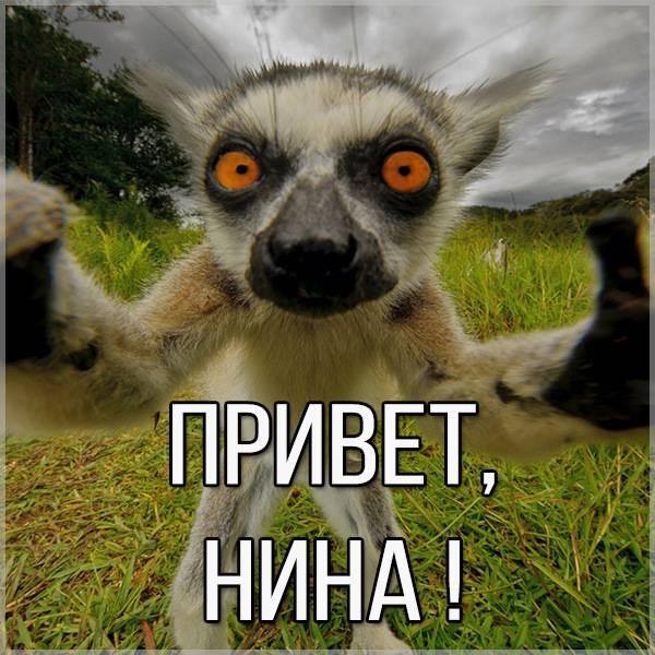 Открытка Нина привет - скачать бесплатно на otkrytkivsem.ru
