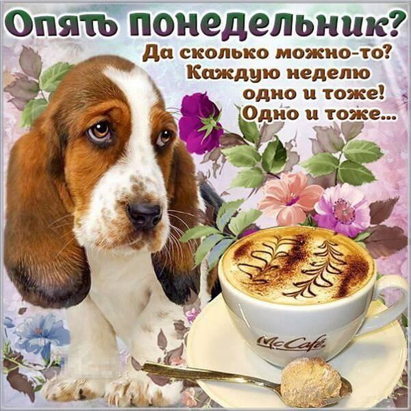 Открытка опять понедельник - скачать бесплатно на otkrytkivsem.ru