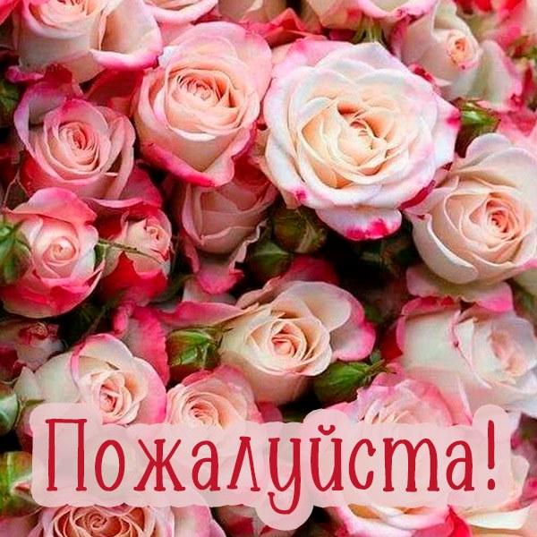 Открытка пожалуйста женщине - скачать бесплатно на otkrytkivsem.ru