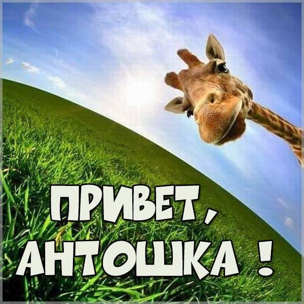 Открытка привет Антошка - скачать бесплатно на otkrytkivsem.ru
