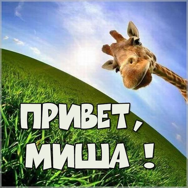 Открытка привет Миша - скачать бесплатно на otkrytkivsem.ru