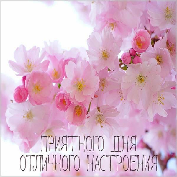 Открытка приятного дня и отличного настроения - скачать бесплатно на otkrytkivsem.ru