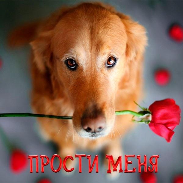 Открытка прости меня фото - скачать бесплатно на otkrytkivsem.ru