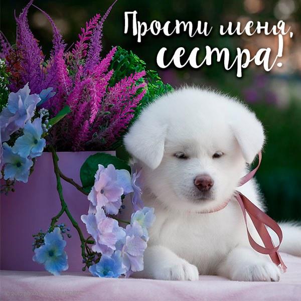 Открытка прости меня сестра - скачать бесплатно на otkrytkivsem.ru