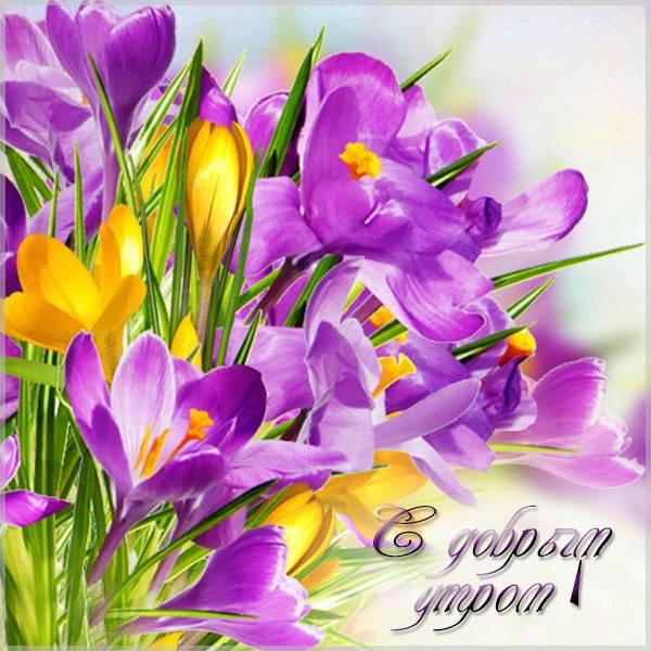 Открытка с добрым утром девушке цветы - скачать бесплатно на otkrytkivsem.ru