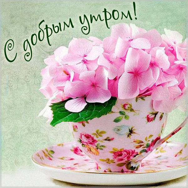 Открытка с добрым утром цветы женщине - скачать бесплатно на otkrytkivsem.ru