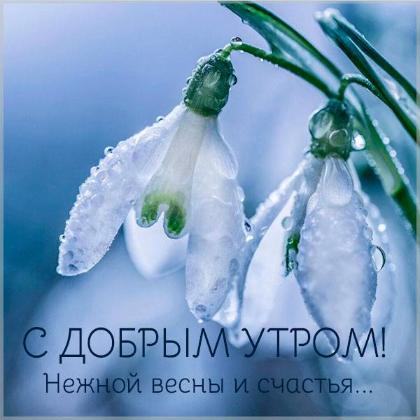 Открытка с добрым весенним утром девушке - скачать бесплатно на otkrytkivsem.ru