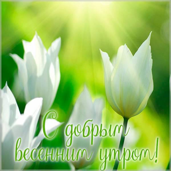 Открытка с добрым весенним утром новая - скачать бесплатно на otkrytkivsem.ru