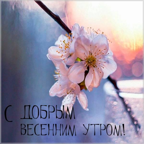 Открытка с добрым весенним утром женщине - скачать бесплатно на otkrytkivsem.ru
