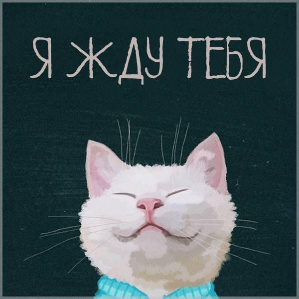 Открытка с надписью я жду тебя - скачать бесплатно на otkrytkivsem.ru