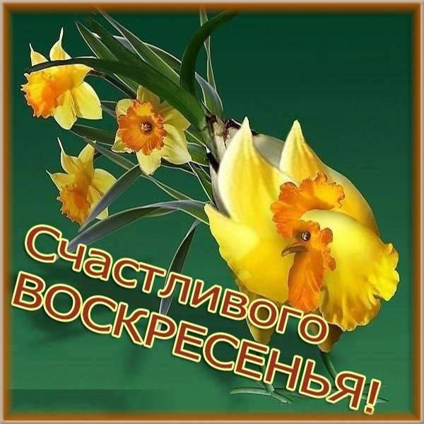 Открытка с пожеланием счастливого воскресного дня - скачать бесплатно на otkrytkivsem.ru