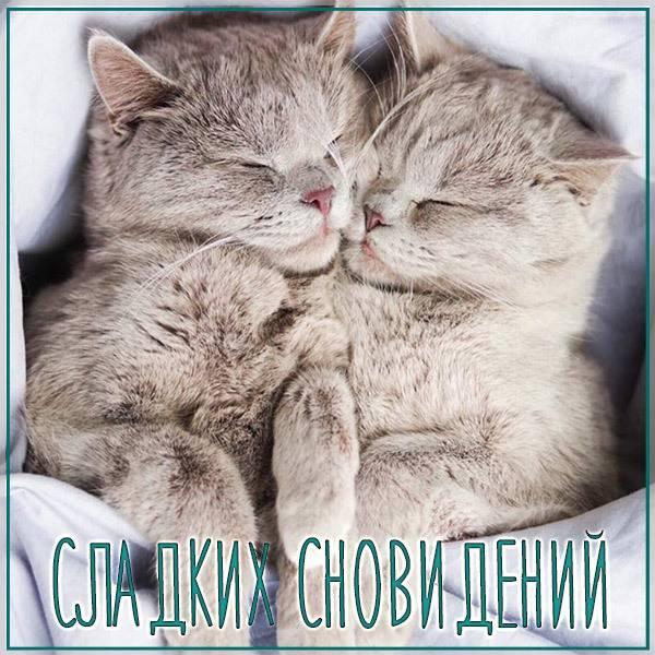Открытка сладких сновидений - скачать бесплатно на otkrytkivsem.ru