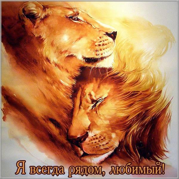 Открытка со львами любимому - скачать бесплатно на otkrytkivsem.ru