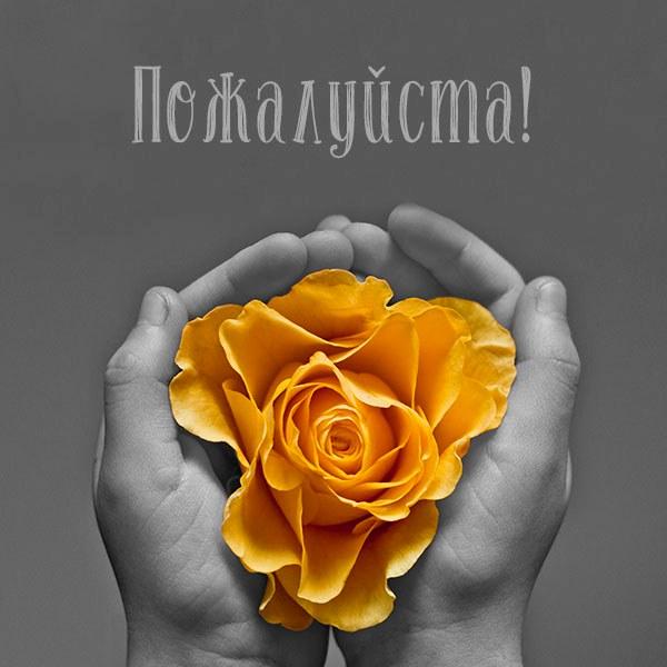 Открытка со словом пожалуйста - скачать бесплатно на otkrytkivsem.ru