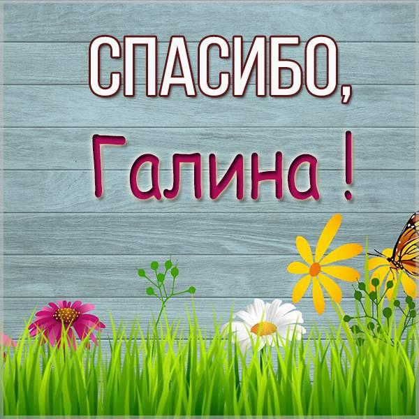 Открытка спасибо Галина - скачать бесплатно на otkrytkivsem.ru