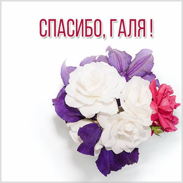 Открытка спасибо Галя - скачать бесплатно на otkrytkivsem.ru