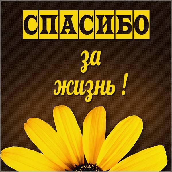 Открытка спасибо за жизнь - скачать бесплатно на otkrytkivsem.ru