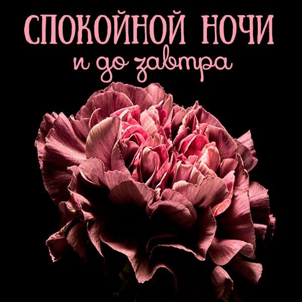 Открытка спокойной ночи и до завтра - скачать бесплатно на otkrytkivsem.ru