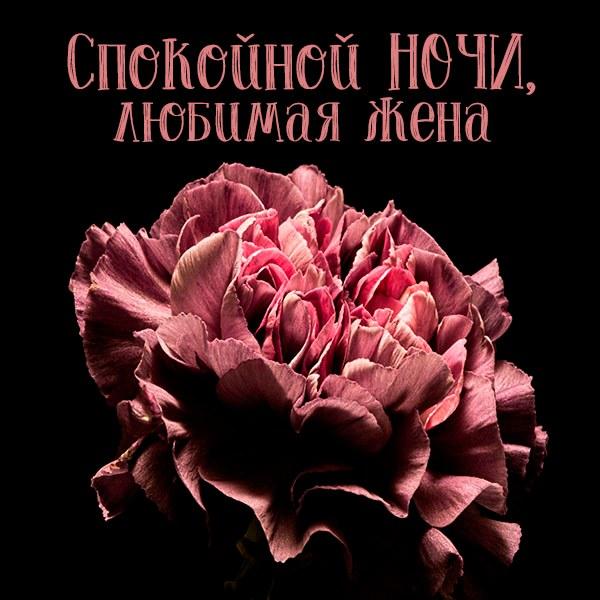 Открытка спокойной ночи любимой жене - скачать бесплатно на otkrytkivsem.ru