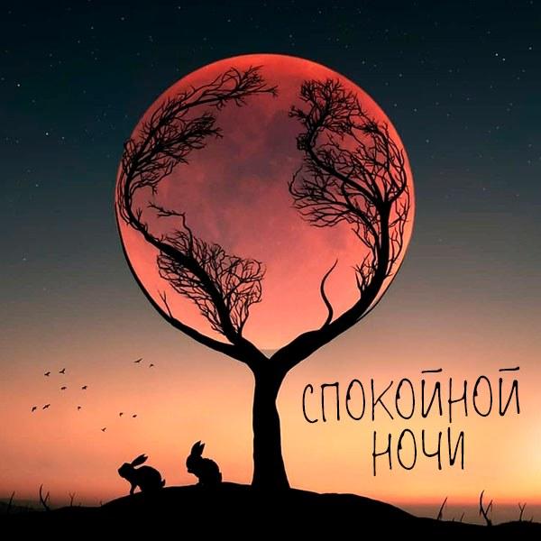 Открытка спокойной ночи с животными - скачать бесплатно на otkrytkivsem.ru