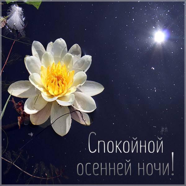 Открытка спокойной осенней ночи - скачать бесплатно на otkrytkivsem.ru