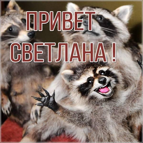 Открытка Светлана привет - скачать бесплатно на otkrytkivsem.ru