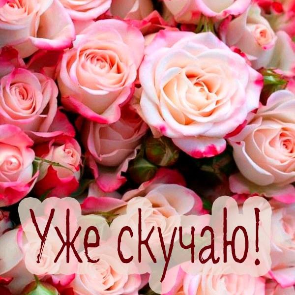 Открытка уже скучаю - скачать бесплатно на otkrytkivsem.ru