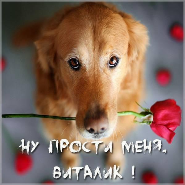 Открытка Виталик прости меня - скачать бесплатно на otkrytkivsem.ru