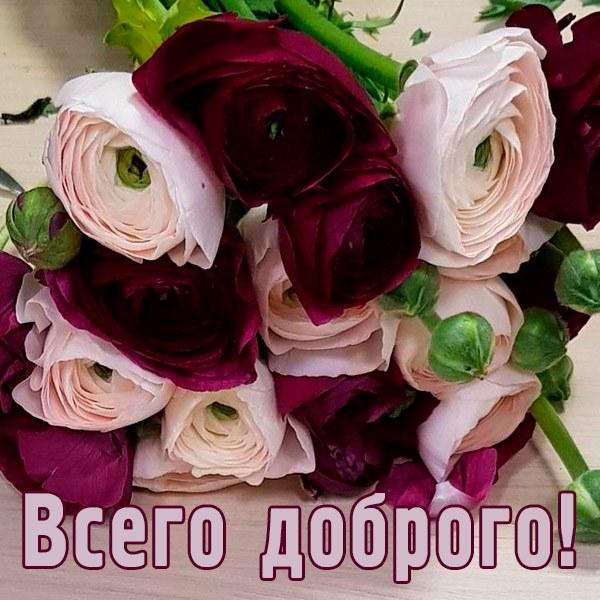 Открытка всего доброго цветы - скачать бесплатно на otkrytkivsem.ru