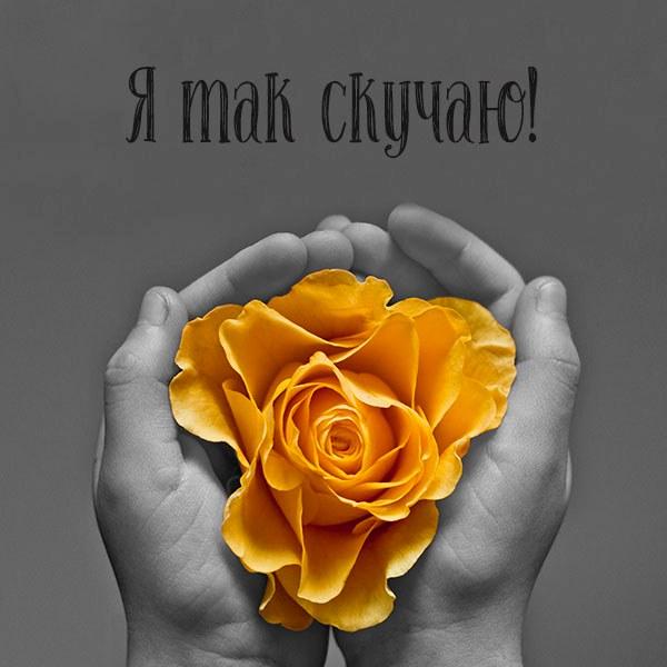 Открытка я так скучаю - скачать бесплатно на otkrytkivsem.ru