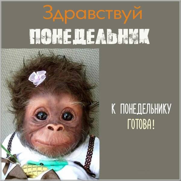 Открытка здравствуй понедельник - скачать бесплатно на otkrytkivsem.ru