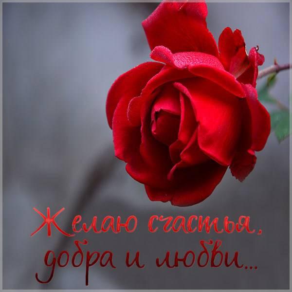 Открытка желаю счастья и добра любви - скачать бесплатно на otkrytkivsem.ru